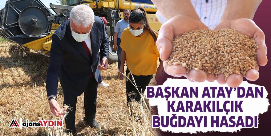 Başkan Atay'dan karakılçık buğday hasadı