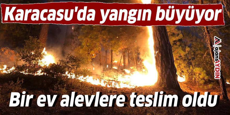 Karacasu'da yangın büyüyor
