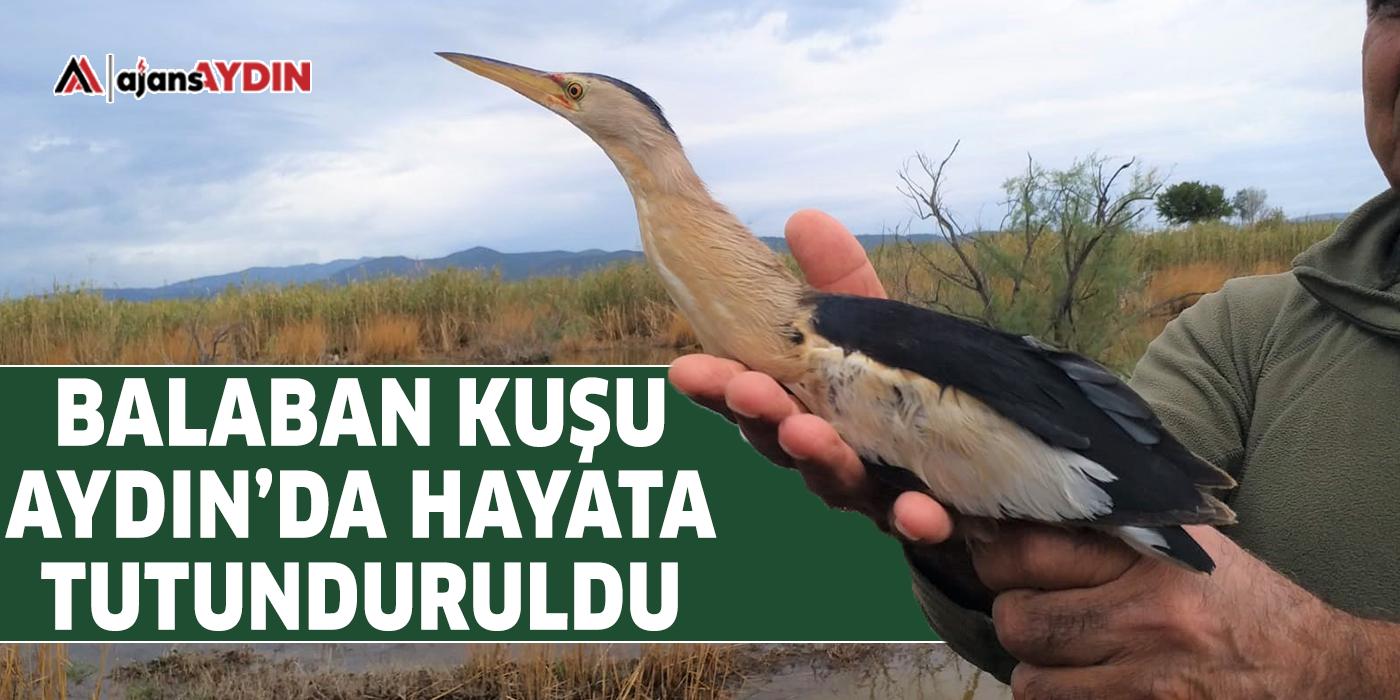 Balaban kuşu Aydın'da hayata tutunduruldu