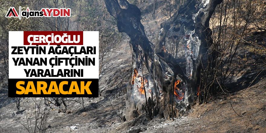 Başkan Çerçioğlu zeytin ağaçları yanan çiftçinin yaralarını saracak