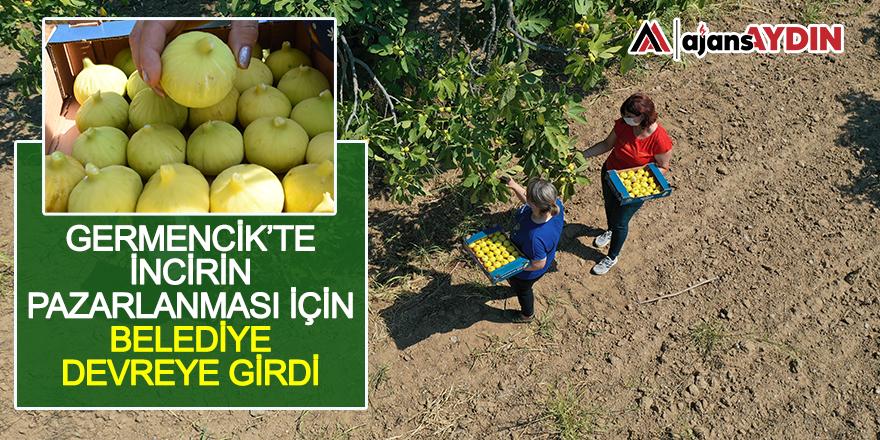 Germencik'te incirin pazarlanması için belediye devreye girdi