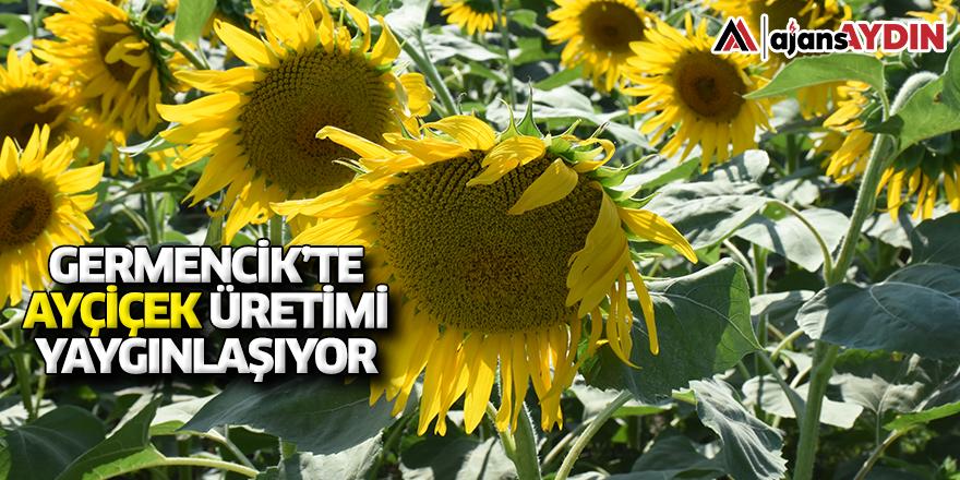 Germencik'te ayçiçek üretimi yaygınlaşıyor