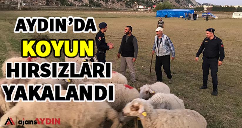 Aydın'da koyun hırsızları yakalandı