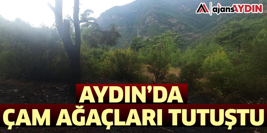 Aydın'da çam ağaçları tutuştu