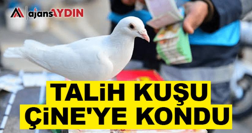 TALİH KUŞU ÇİNE'YE KONDU