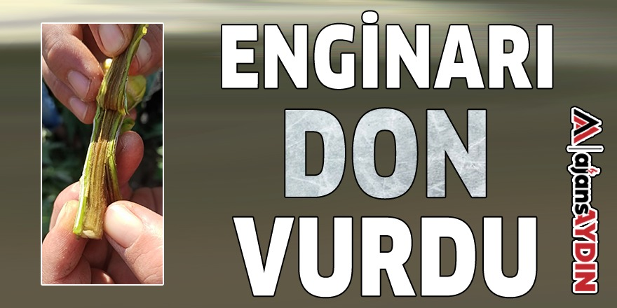 ENGİNARI DON VURDU